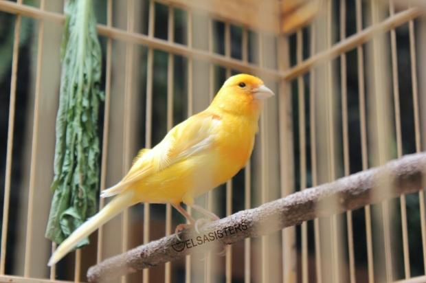 Pretty bird ♥