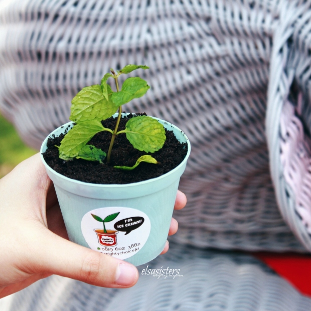 Mighty Choice Potted Plant Ice Cream, 30k
