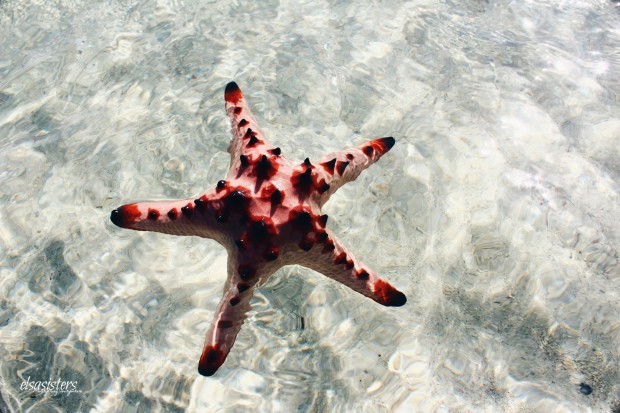 Starfish at Sand Island