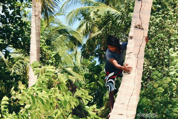 Our captain's friend climbing a coconut tree