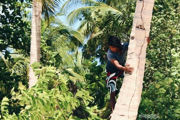 Our captain's friend climbing a coconut tree